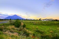 与农田和吃草母牛的新西兰风景在背景火山Taranaki 库存图片
