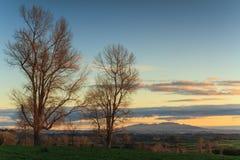 与冬天树和遥远的山的日落领域 怀卡托,新西兰 免版税库存照片