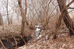 与冬天森林的风景 库存照片