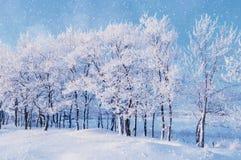 与冬天降雪和阳光下跌的雪花冬天风景的冬天风景在冬天树丛 库存照片