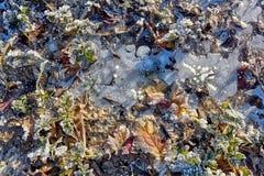 与冰叶子和地面的冬天领域 免版税库存图片