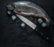 与冰和刀子的新鲜的鳟鱼 库存照片