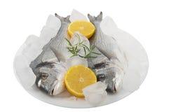 与冰和柠檬的两条新鲜的dorado鱼在板材 库存照片