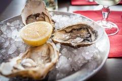 与冰和柠檬的牡蛎 免版税库存照片
