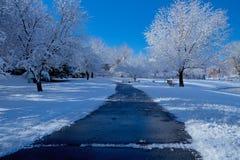 与冰川覆盖的树的斯诺伊步行 免版税库存图片