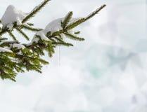 与冰柱的积雪的冷杉分支在蓝色背景的冬天 图库摄影