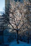 与冰的树在分支 免版税库存照片