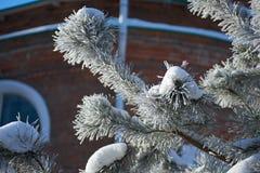与冰的毛皮树分支 免版税图库摄影