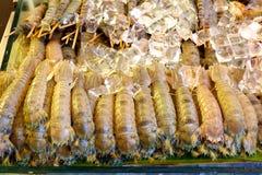 与冰的虾蛄 免版税库存照片