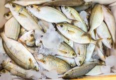 与冰的许多小被抓的死的鱼在市场上 库存图片