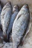 与冰的贫乏鱼在鱼市上 免版税库存照片