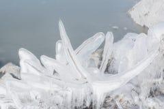 与冰的冻灌木在冬天湖 免版税图库摄影