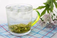 与冰的绿茶 免版税库存照片