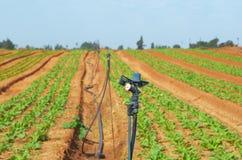与冲击电动子喷水隆头的灌溉的庄稼 图库摄影