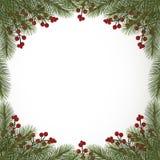 与冷杉分支和莓果的冬天背景 免版税库存照片