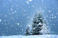 与冷杉木和降雪的神仙的冬天风景 圣诞节gr 免版税库存照片