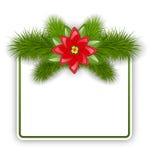 与冷杉枝杈和花一品红的圣诞节明信片 免版税图库摄影