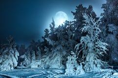 与冷杉森林雪和满月的每夜的风景 免版税库存照片