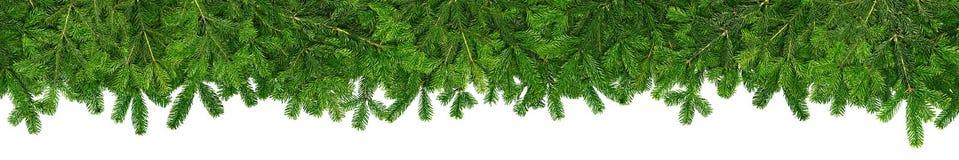 与冷杉的圣诞节诗歌选超级宽全景横幅分支 免版税库存图片