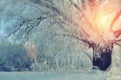 与冷淡的冬天树的冬天风景在日出 图库摄影