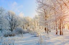 与冷淡的树的冬天背景在晴朗的天气的冬天森林里 33c 1月横向俄国温度ural冬天 库存照片