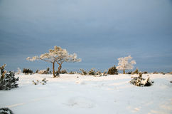 与冷淡的树的冬天视图在一个简单的风景 免版税库存照片