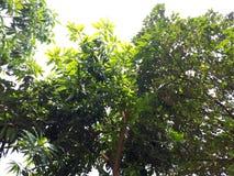 与冷的绿色叶子居住 免版税库存图片