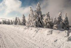 与冻小树、积雪的路和蓝天的冬天风景与云彩 免版税库存图片
