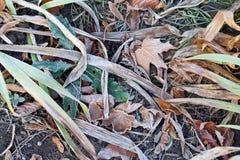 与冻结叶子的秋天背景 免版税库存照片