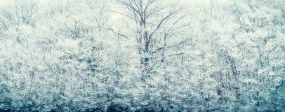 与冻结的积雪的树和分支的冬天背景 免版税库存照片