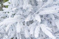 与冻结的霜的圣诞树在分支 库存照片