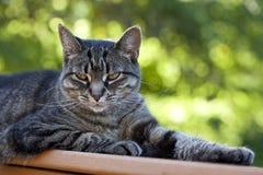 与凉快的Cattitude的猫 库存图片