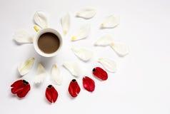 与几朵五颜六色的花和咖啡的花卉样式 免版税图库摄影