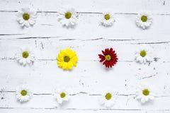 与几朵五颜六色的花的花卉样式 免版税图库摄影