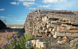 与击倒的被烧的树的柴堆 免版税库存图片