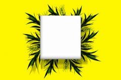 与分支和叶子的花卉圆的框架在白色和黄色背景 免版税库存图片