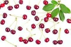 与分支和叶子的莓果成熟樱桃 免版税图库摄影