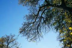 与分支和秋天叶子的秋天背景 Braches反对 免版税库存照片
