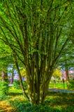 与分支的树在公园 图库摄影