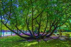 与分支的树在公园 免版税库存照片