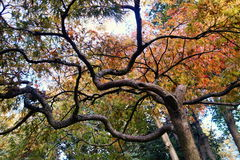 与分支的秋天树 库存图片