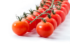 与分支的红色蕃茄在白色 库存图片