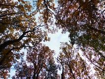 与分支的装饰背景纹理的宏观照片与高树红色叶子的在透视的 免版税库存照片