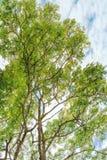 与分支的绿色树 免版税库存照片