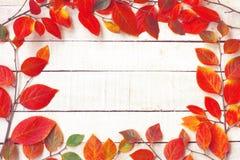 与分支,五颜六色的leawes的秋天背景 库存图片