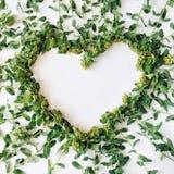 与分支,叶子,在白色背景隔绝的瓣的黄色和绿色花卉花圈框架心脏 免版税库存图片
