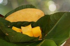 与切片的一个黄色芒果以立方体被投入的绿色离开篮子 库存图片