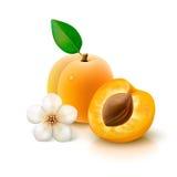 与切片的杏子在白色背景 免版税库存图片