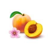 与切片的桃子在白色背景 免版税库存照片
