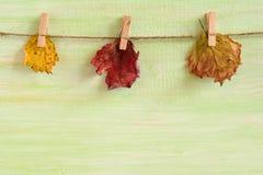 与别针的三干燥黄色和红色秋叶在木背景的一条绳索 免版税库存图片